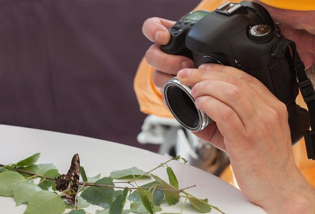 Macro vivre papillon sur la table