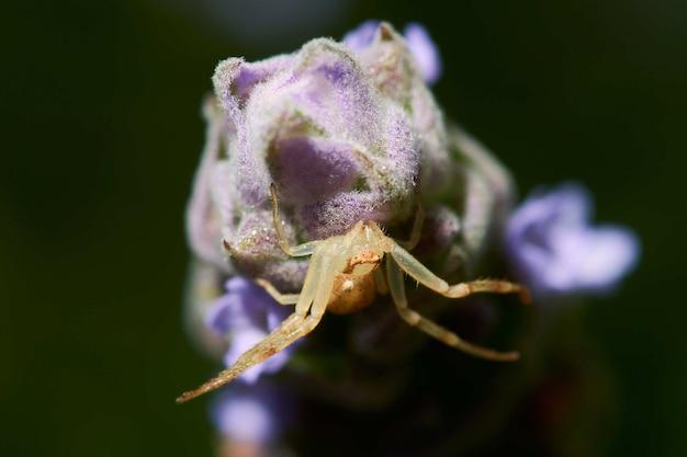Macrophotographie d'une araignée sur une plante à fleurs