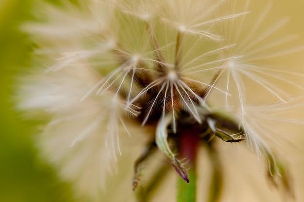 Macrophotographie d'une fleur aux graines blanches et vertes.