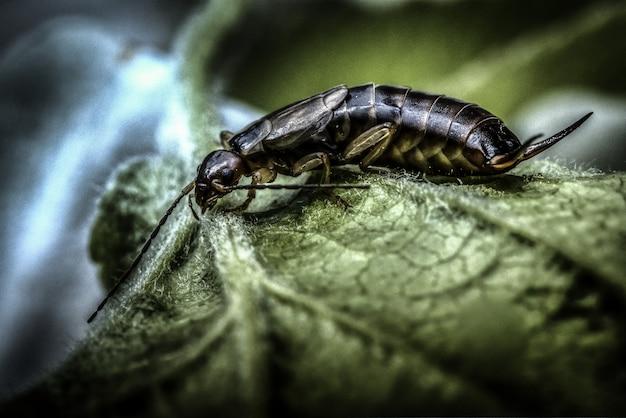Macrophotographie d'un insecte tigré sur une feuille verte