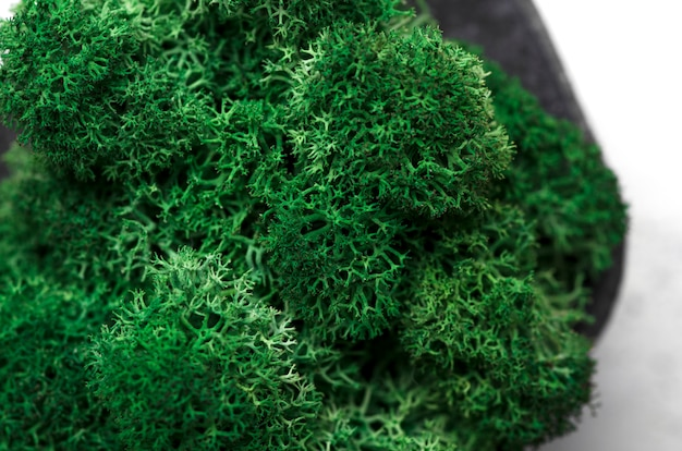 Macrophotographie de mousse verte dans un pot en béton. vue de dessus