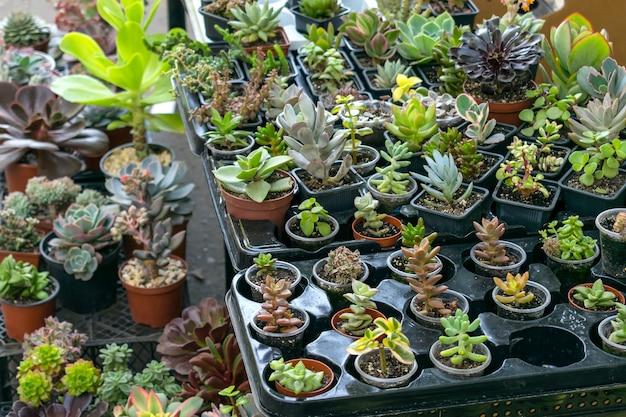 Magasin de rue de plantes d'intérieur de fleur