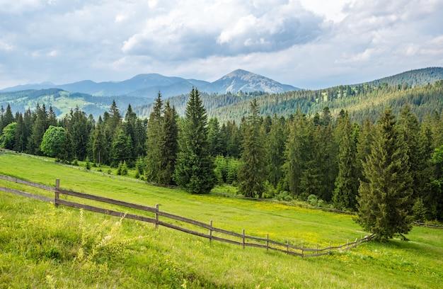 Magnifique beau paysage pittoresque de prairies vertes dans le contexte d'une forêt de conifères poussant sur les montagnes dans une chaude journée d'été nuageuse et ensoleillée