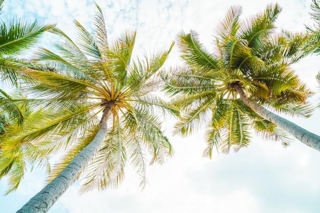 Magnifique cocotier sur ciel bleu