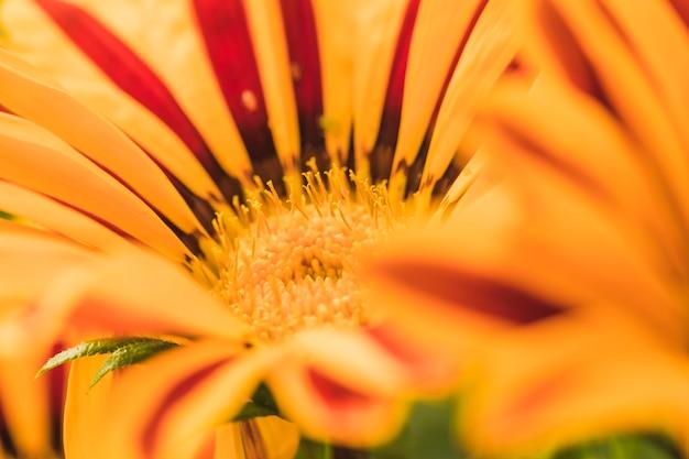 Magnifique fleur jaune exotique