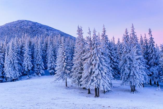 Magnifique paysage d'hiver