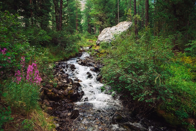 Magnifique ruisseau d'eau rapide dans le ruisseau de montagne sauvage. incroyable paysage de forêt verte pittoresque.