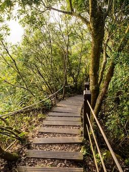 Le magnifique sentier de montagne entouré d'arbres