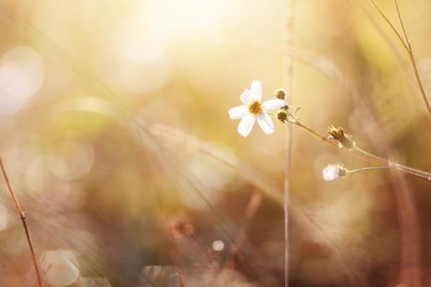 Magnifiques champs de fleurs sauvages rouges qui tombent au printemps et à la lumière naturelle du soleil qui brille sur la montagne.
