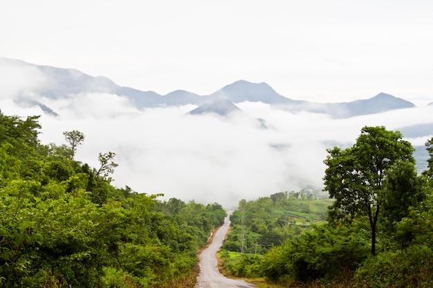 Magnifiques collines d'été du matin givrées avec des forêts