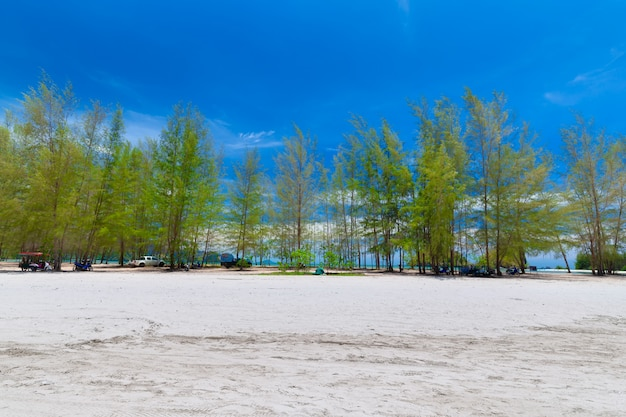 Magnifiques plages de sable et vues sur les pins au paradise island à krabi en thaïlande
