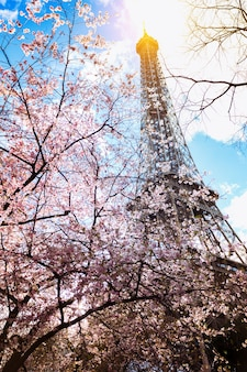 Magnolia en fleurs sur fond de tour eiffel