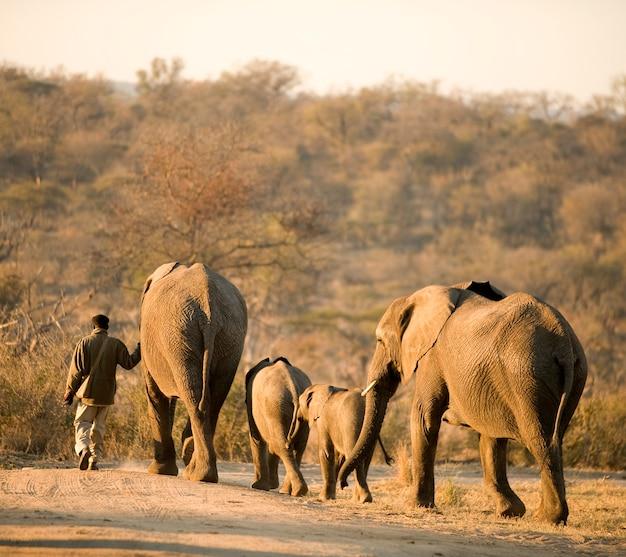 Mahout et son éléphant