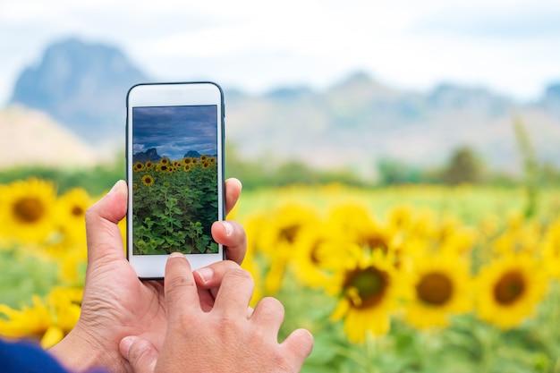 Main à l'aide de téléphone prenant photo beauté champ de tournesols.