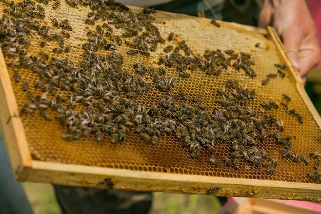 La main de l'apiculteur travaille avec des abeilles et des ruches sur le rucher. abeilles sur nids d'abeille. cadres d'une ruche d'abeilles