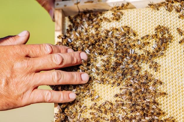 La main de l'apiculteur travaille avec les abeilles et les ruches sur le rucher