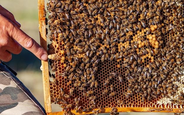 Main d'apiculteur
