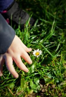 Main de bébé avec fleur de marguerite