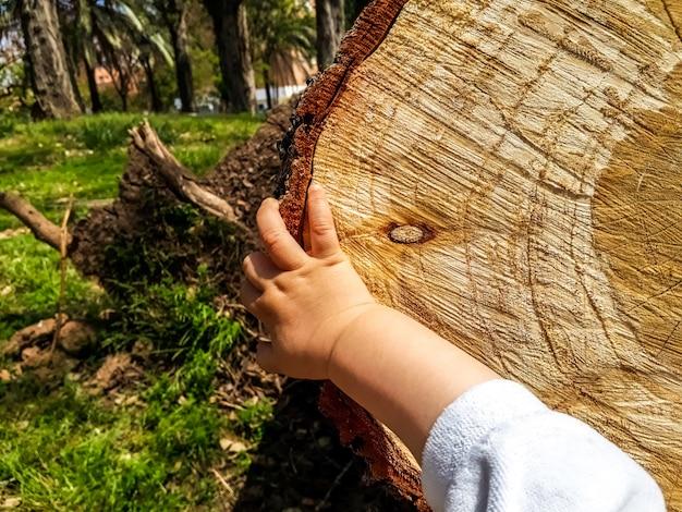 Main d'un bébé touchant la texture d'un tronc d'arbre scié.