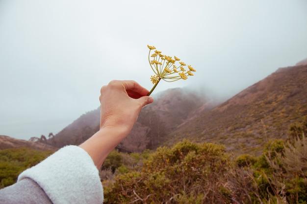La main de la belle femme tient une fleur déchirée sur un fond de nature grise nuageuse