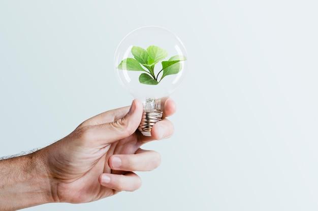Main de campagne d'énergie durable tenant le remix de médias d'ampoule d'arbre