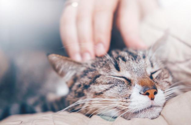 Main caressant un chat, chat avec maître, relations entre animaux et humains