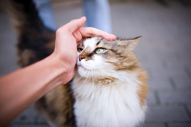 Main caressant un chat.