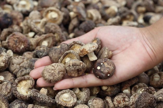 À la main avec des champignons shiitake séchés