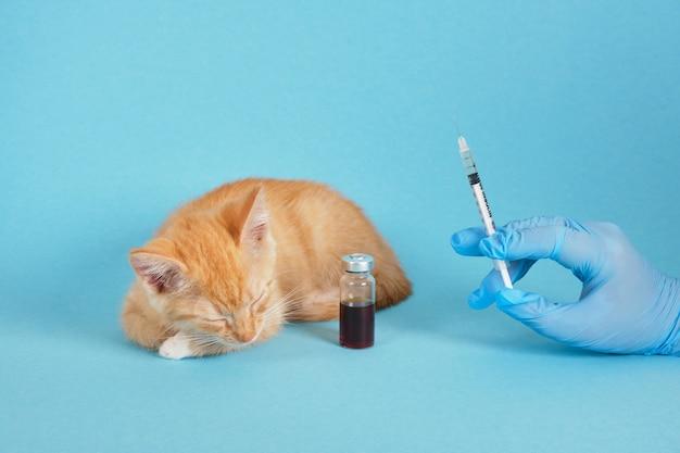 La main dans le gant tient la seringue d'insuline, le chaton mignon de gingembre de sommeil et la vaccination animale de médecine