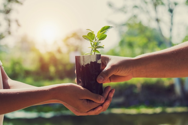 Main donnant des plantes pour la plantation au lever du soleil
