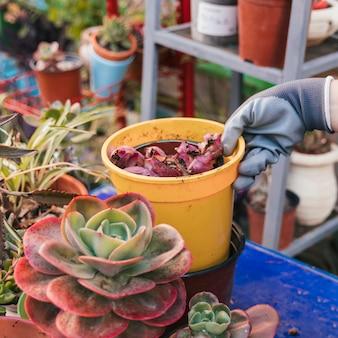 Main du jardinier tenant une plante en pot dans le jardin