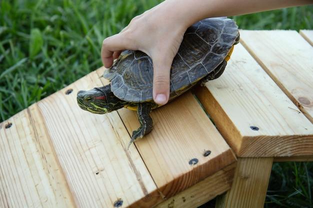 La main de l'enfant essaie de maintenir la tortue rousse sur un petit pont en bois. enfants et animaux.