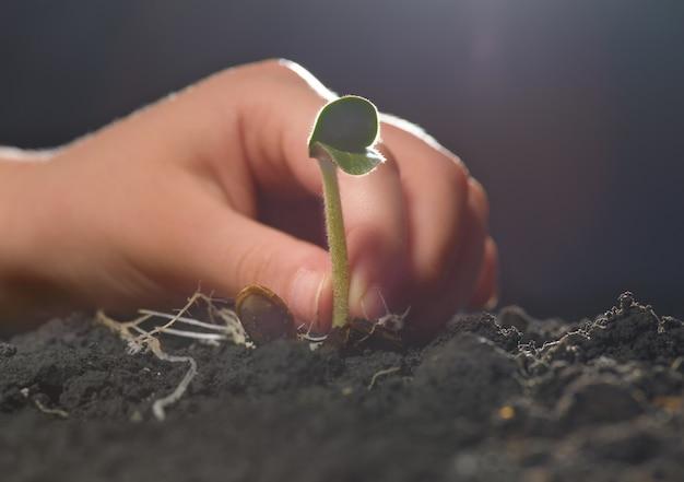 La main d'un enfant plante les semis dans le sol.