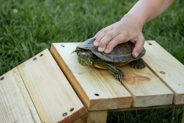 La main de l'enfant presse la tortue rousse contre un banc en bois