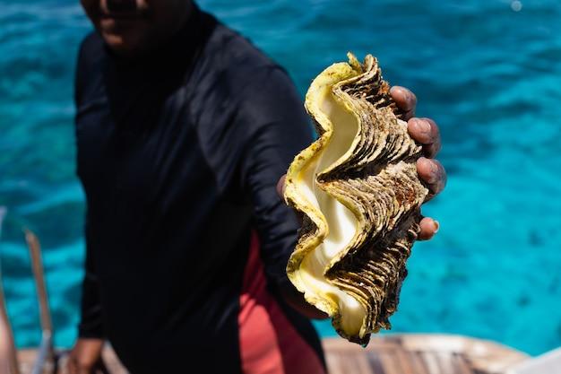 Une main avec un énorme coquillage du fond de la mer rouge