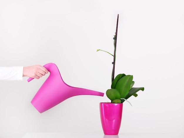 Une main féminine arrosant une orchidée