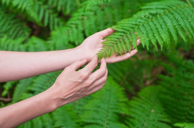 La main féminine, aux longs doigts gracieux, touche doucement la plante, les feuilles de fougère. gros plan d'une personne méconnaissable.
