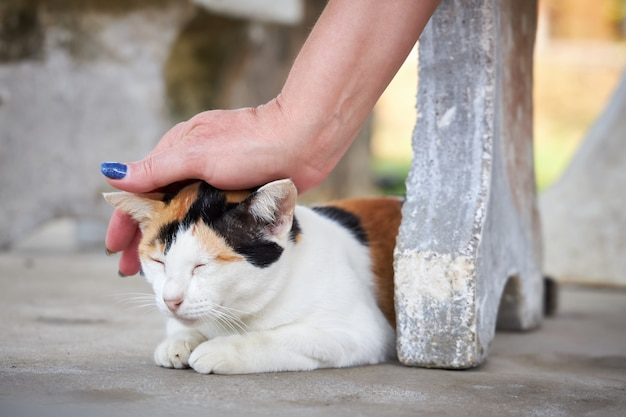 Main féminine caressant un chat tricolore assis sur le trottoir