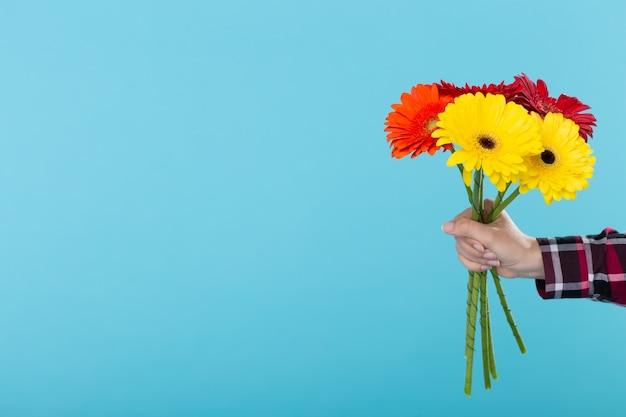 Main féminine dans une chemise à carreaux tenant un bouquet de gerbers jaune rouge et orange sur un mur bleu