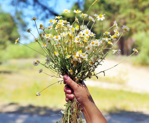 Une main féminine tient un bouquet de marguerites blanches