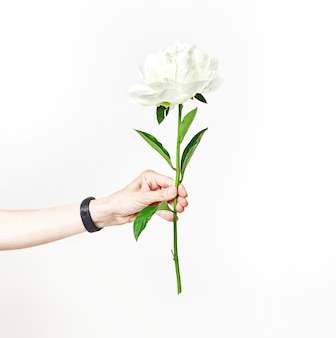 Main féminine tient un brin de pivoine