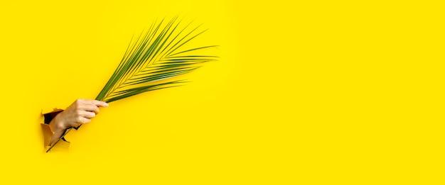 Une main féminine tient une feuille verte d'un palmier dans un fond de carton jaune déchiré