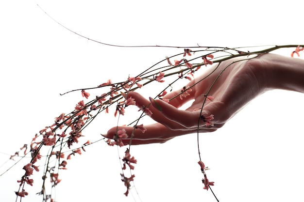 La main féminine tient des fleurs. concept de beauté