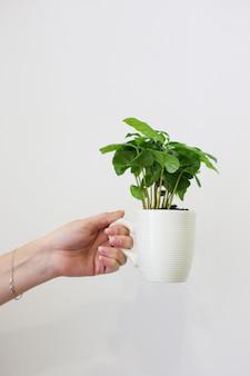 Main féminine tient une tasse blanche avec plante verte