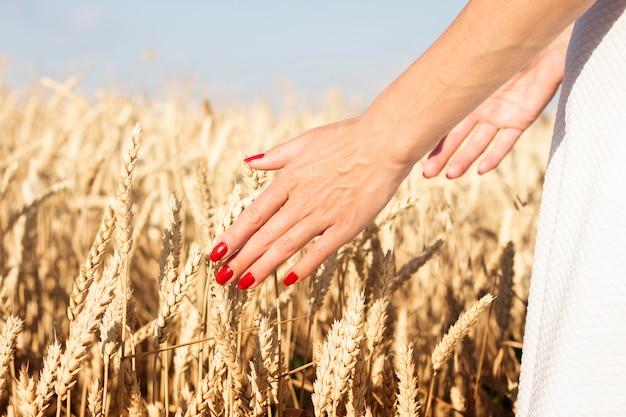 La main féminine touche des épis de blé ou d'orge sur le terrain. bon concept de récolte, céréales, produit naturel