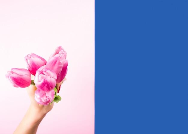 Main féminine avec des tulipes sur fond rose et bleu