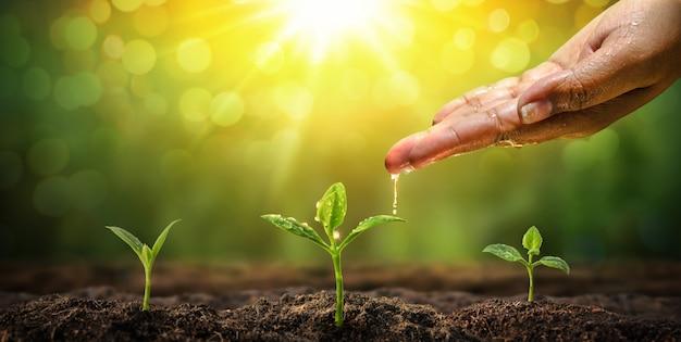 Main de femme arrosant à fond naturel jeune plante
