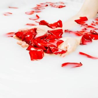 Main de femme avec de beaux pétales de fleurs rouges dans un bain à remous avec du lait
