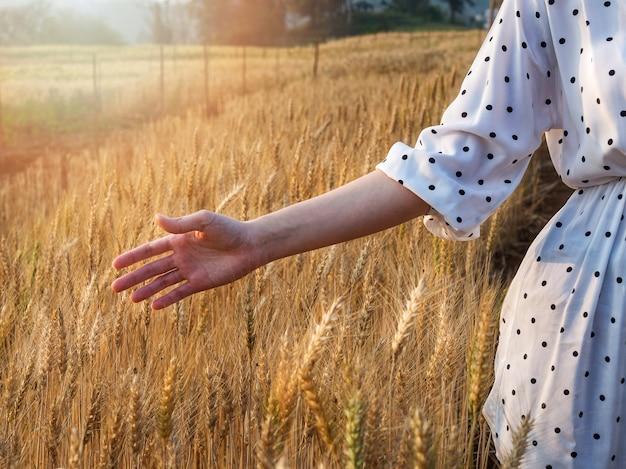 Main de femme caressant quelques oreilles d'orge au moment du coucher du soleil.
