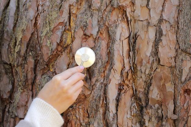 Main femme écoute un arbre avec un stéthoscope dans la forêt, concept aime l'environnement.